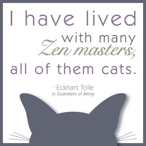 Eckhart Tolle quote on cats